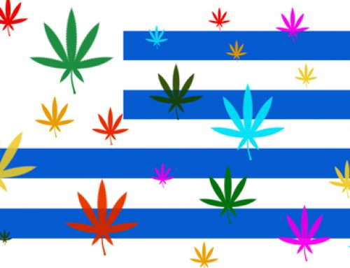 What happened with cannabis legalization in Uruguay?