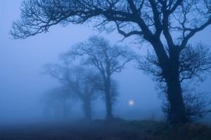 Farmland Oaks & Rising Moon, Norfolk, December