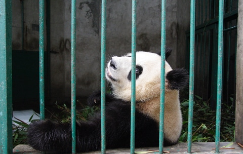 After Fed delay, investors consider Chinese elephant in the room •